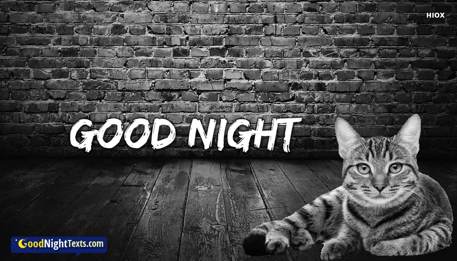 Good Night Cat