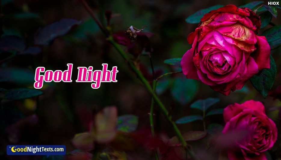 Good Night Wallpaper with Rose Images
