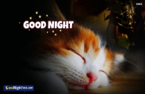 Good Night Cute Cat